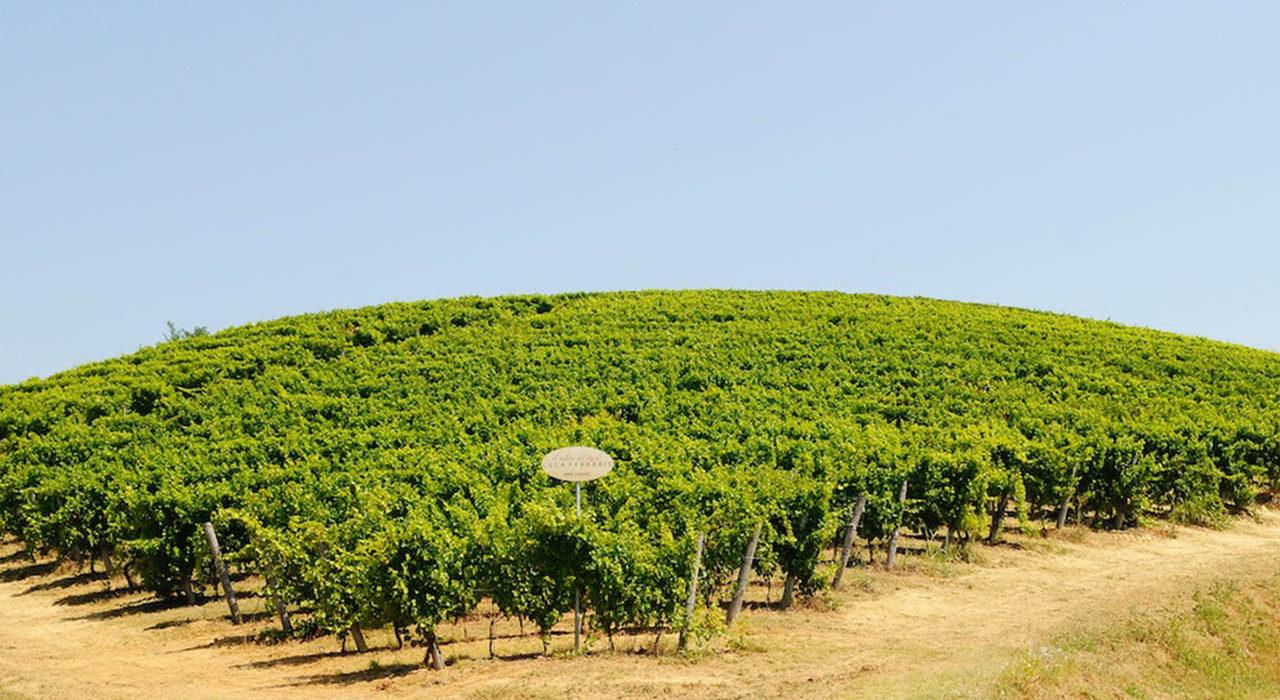 Ferraris, Vineyards