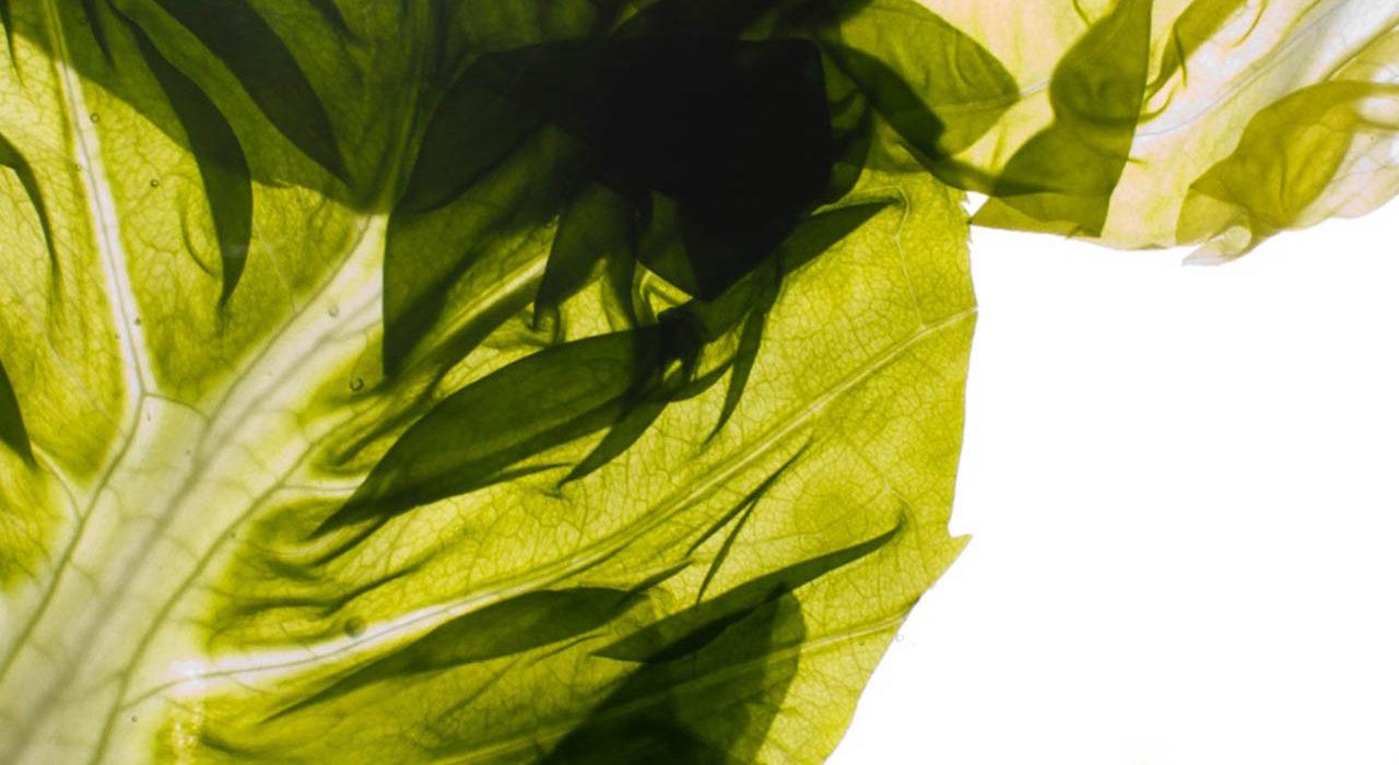 Alfabeto Vegetale di Crippa
