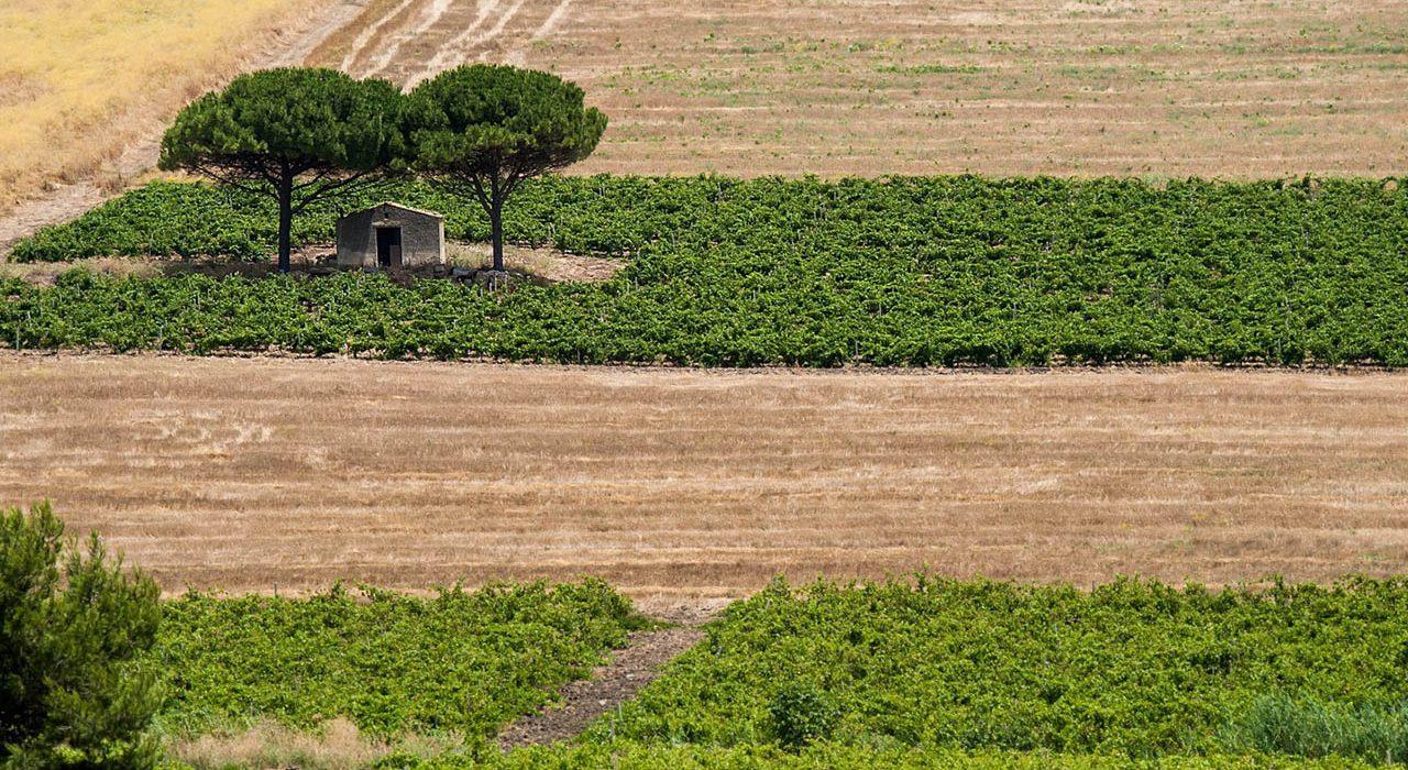 Campagna di Borgo Guarini