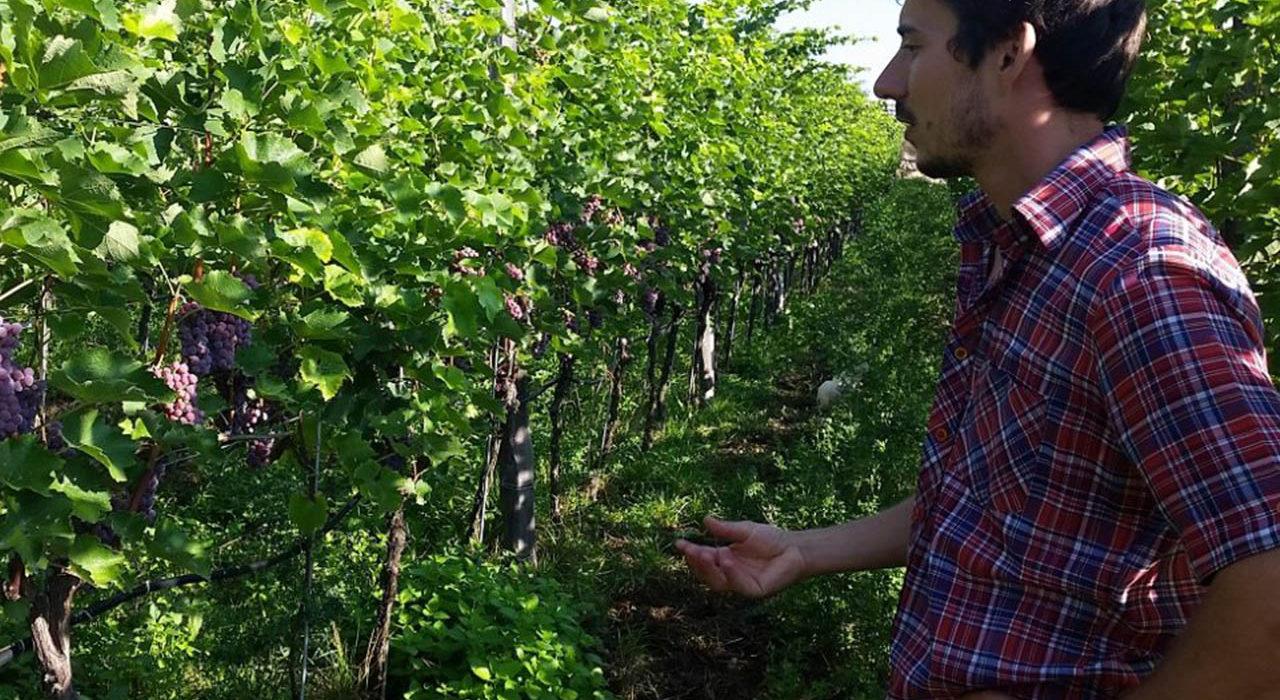 Vini da scoprire, La riscossa dei vini leggeri